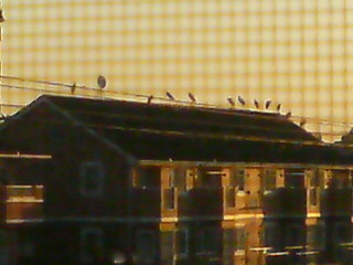 屋根の上に沢山の鳥